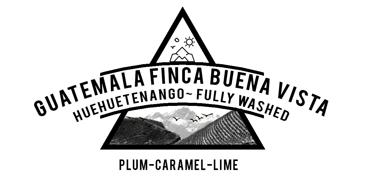GUATEMALA BUENA VISTA FULLY WASHED